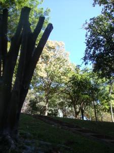 12_arbores_ceo