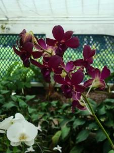 04_jardinbotanico2